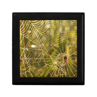 Web of Intrique Gift Boxes