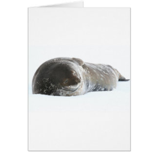 Weddell Seal Card