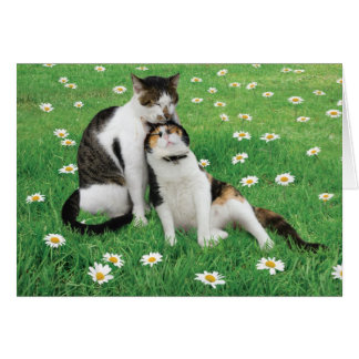 Wedding Anniversary Cat Card