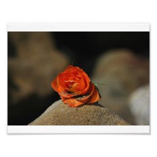 Wedding Rose - Carpinteria, CA Art Photo