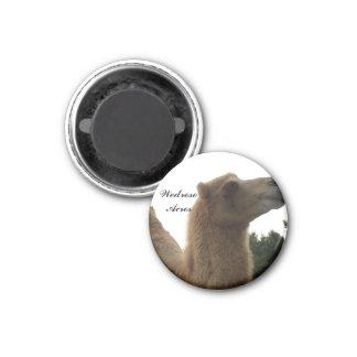 Wedrose Acres camel magnet