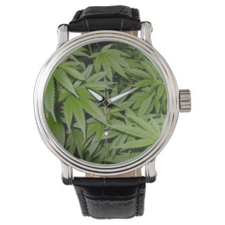 Weed Watch