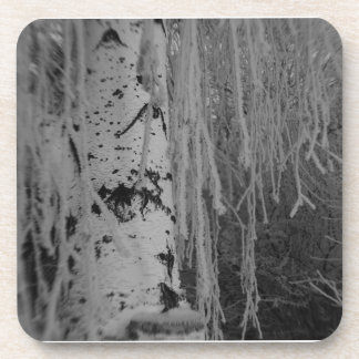Weeping Birch in Winter Drink Coasters