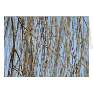 Weeping Willow by the Charles Card