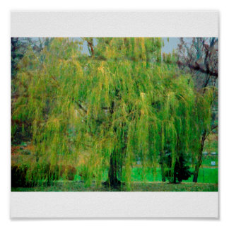 Weeping Willow Poster/Print Poster
