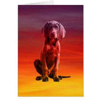 Weimaraner Dog Sitting On Beach Card