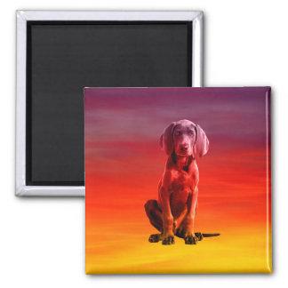 Weimaraner Dog Sitting On Beach Magnet