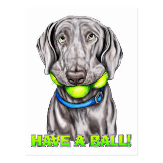 Weimaraner Have a Ball Postcard