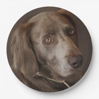 Weimaraner Hunting Dog Paper Plate