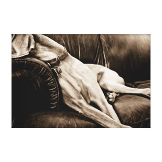 """Weimaraner Nation : """"Taking Over the Couch"""" Canvas Print"""