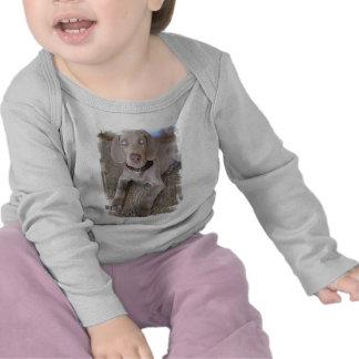 Weimaraner Puppy Infant T Shirts