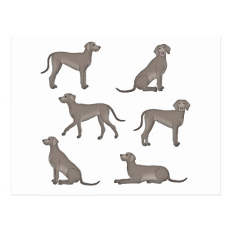 Weimaraner selection postcard