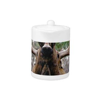 weird bull moose