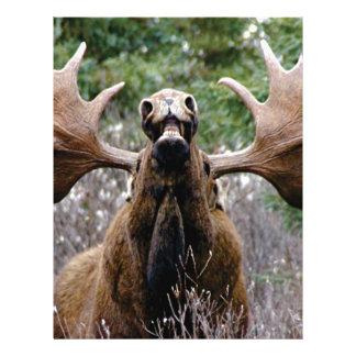 weird bull moose letterhead