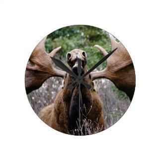 weird bull moose round clock