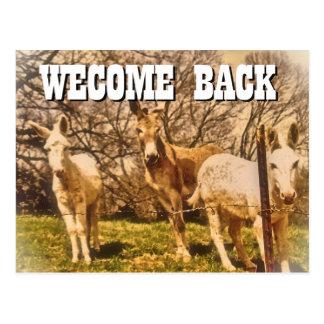 WELCOME BACK Postcard