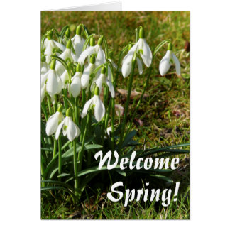 Welcome Spring! Snowdrops 02.2.3 Card