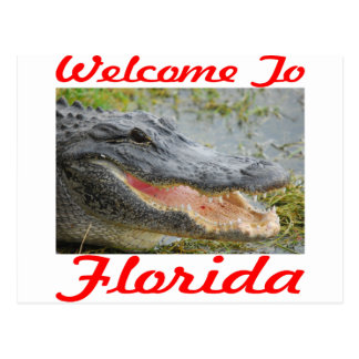 Welcome To Florida Gator Postcard