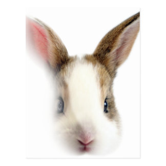 Wellcoda Animal Bunny Rabbit Cute Pet Postcard
