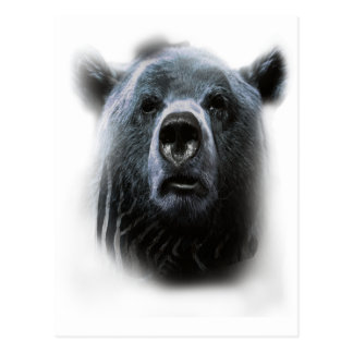 Wellcoda Grizzly Bear Confused Funny Face Postcard