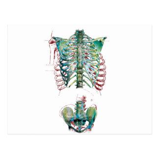 Wellcoda Human Body Rib Cage Skeleton Fun Postcard