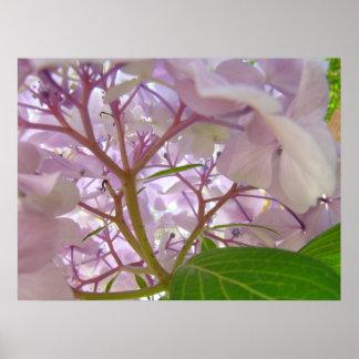 Wellness Healing Touch art gifts Hydrangea Flowers Poster
