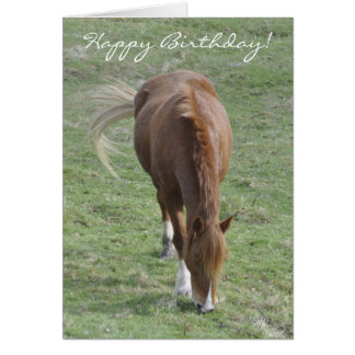 Welsh cob birthday card