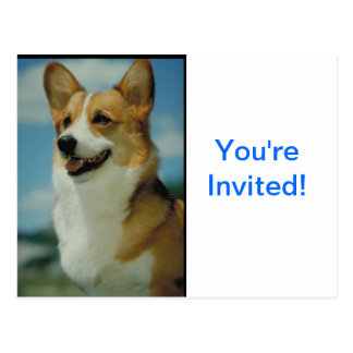 Welsh Corgi Postcard