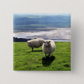 WELSH MOUNTAIN SHEEP 2 INCH SQUARE BUTTON