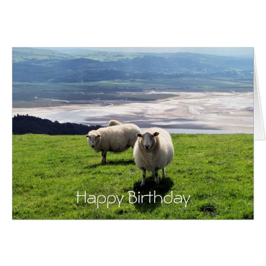WELSH MOUNTAIN SHEEP CARD