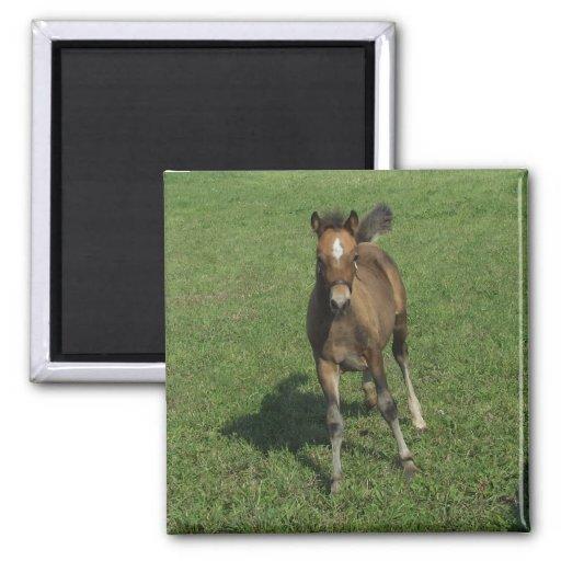 Welsh Pony Foal Magnet