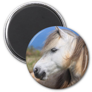 Welsh Pony Magnet