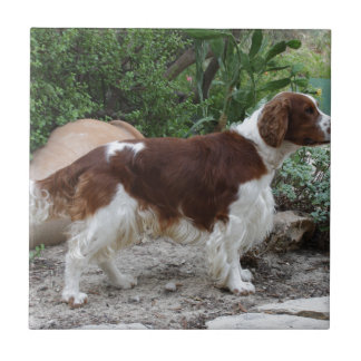 Welsh_Springer_Spaniel_full Tile