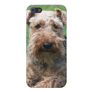 Welsh terrier dog beautiful photo iphone 4 case