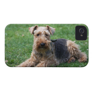 Welsh Terrier dog cute photo blackberry bold case