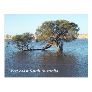 West coast floodwater postcard