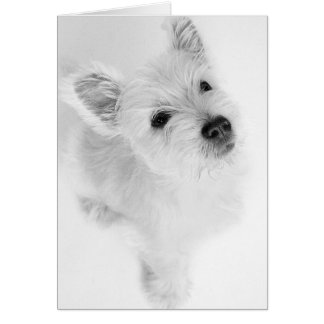 West Highland Terrier Pup Card