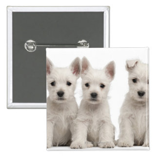 West Highland Terrier puppies (7 weeks old) 2 Inch Square Button