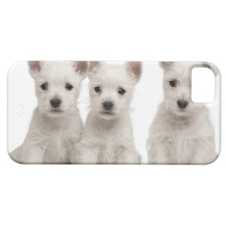 West Highland Terrier puppies (7 weeks old) iPhone 5 Case