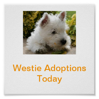 West Highland White Terrier Adoption Today Signs W