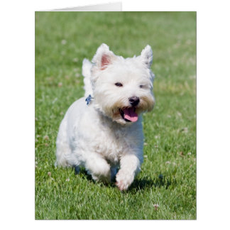 West Highland White Terrier dog custom card