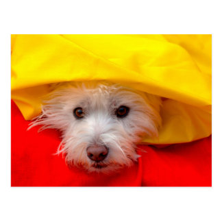West Highland White Terrier peeking out of yellow Postcard