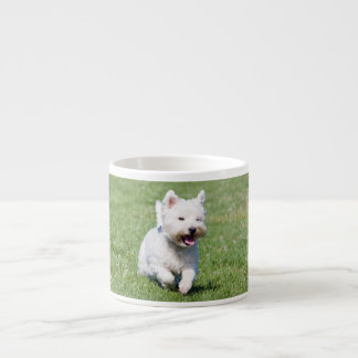 West Highland White Terrier, westie dog cute photo