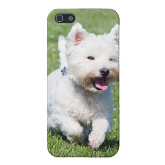 West Highland White Terrier, westie dog cute photo Case For iPhone 5/5S