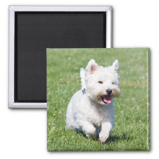 West Highland White Terrier, westie dog cute photo Magnet