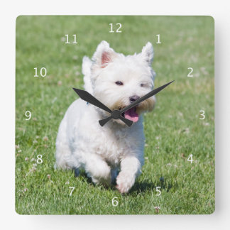 West Highland White Terrier, westie dog cute photo Square Wall Clock