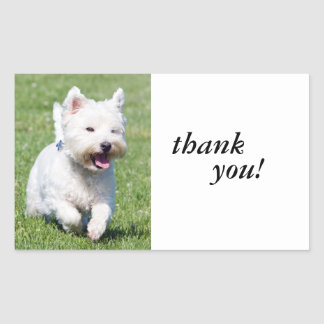 West Highland White Terrier, westie dog cute photo Sticker