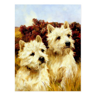 West highland White Terriers - Wardle Postcard