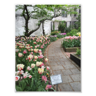 West Side Community Garden Tulip New York City NYC Photo Print