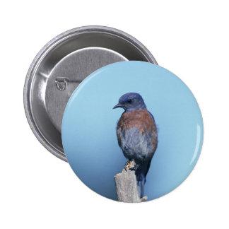 Western Bluebird 2 Inch Round Button